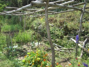 The farm applies organic farming, permaculture, and natural farming principles by growing several kinds of plants in the same area. This creates resistance to pests by increasing biodiversity.